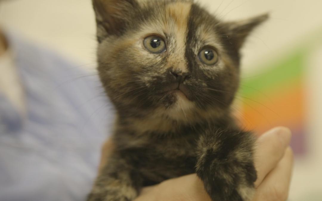 7 Common Misconceptions about the Peterborough Humane Society